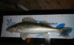 Belgie-visserijkundig-onderzoek-14