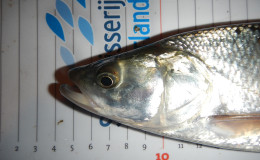 Belgie-visserijkundig-onderzoek-21