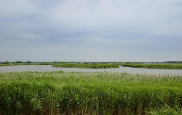 Afvissing karpers natuurmonumenten